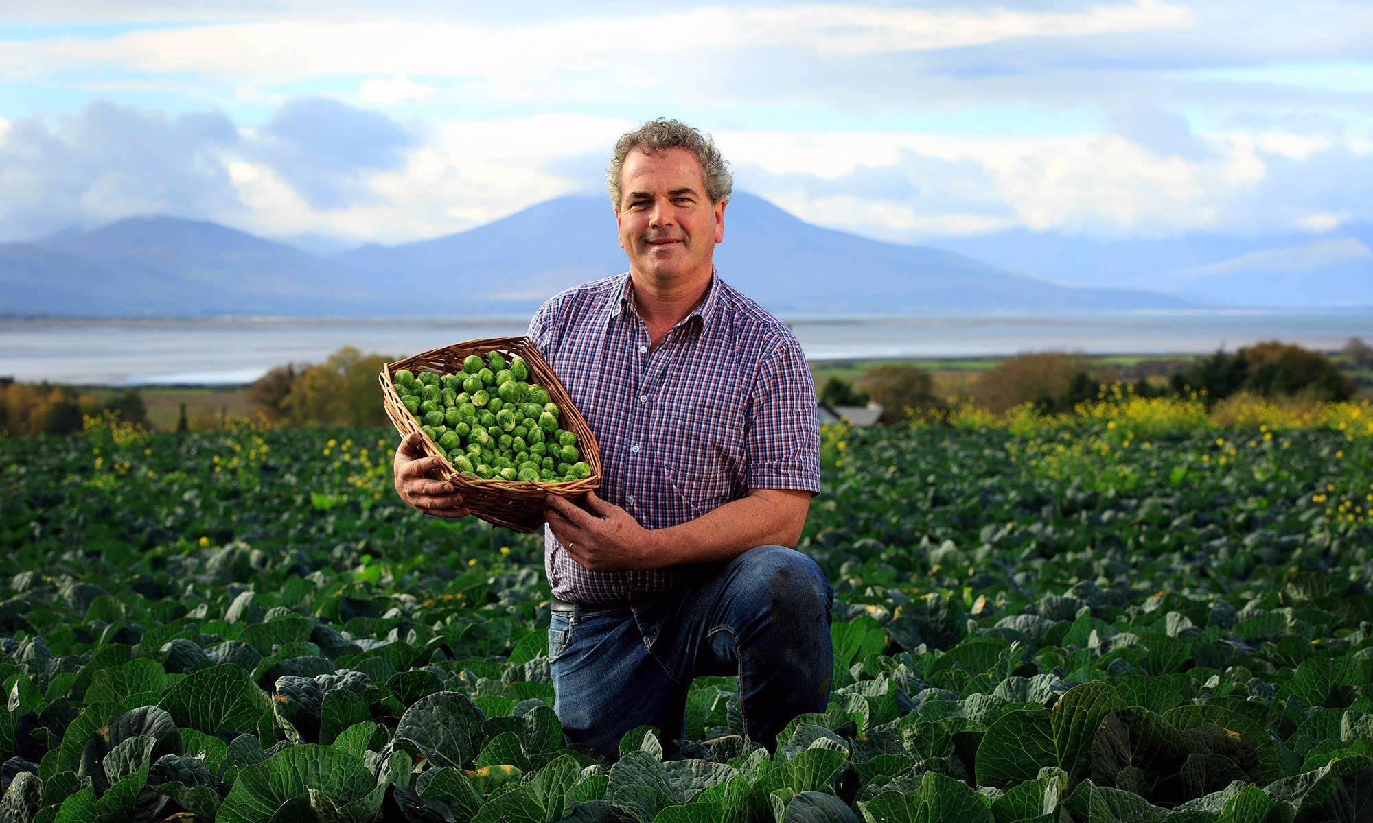 Ballygarron Farm Sprouts