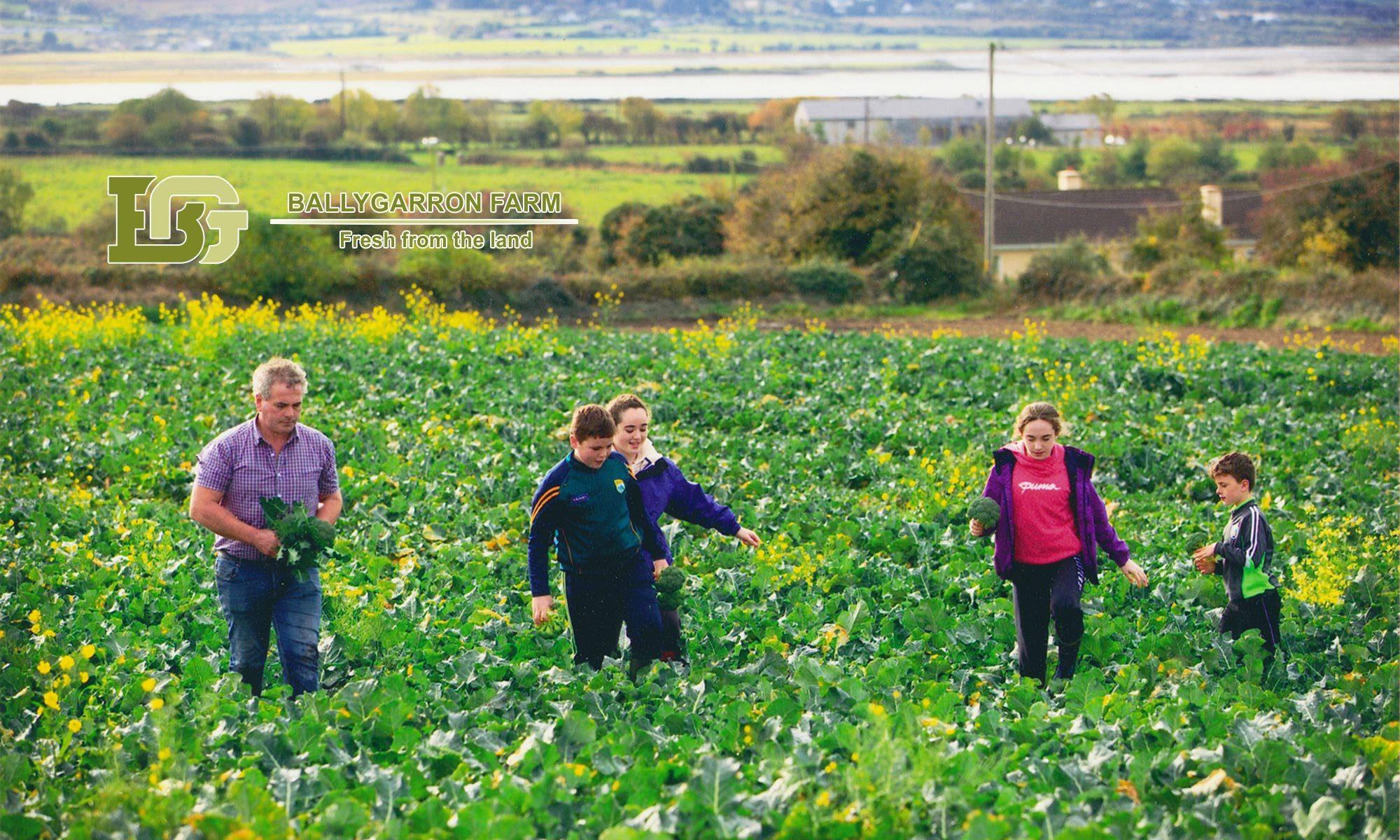 Ballygarron Farm